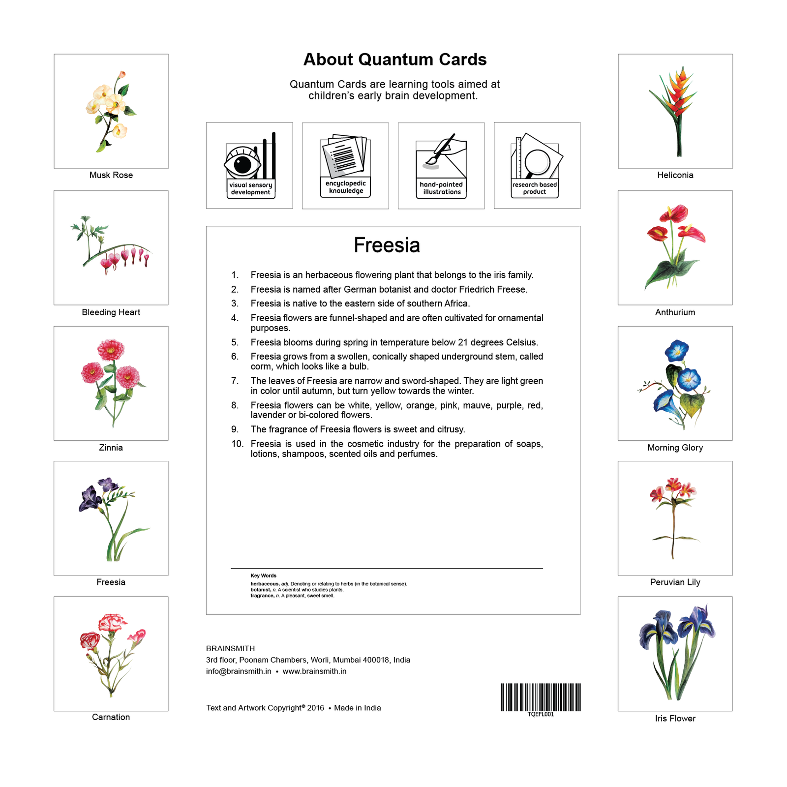 Flowers Flashcards for Kids