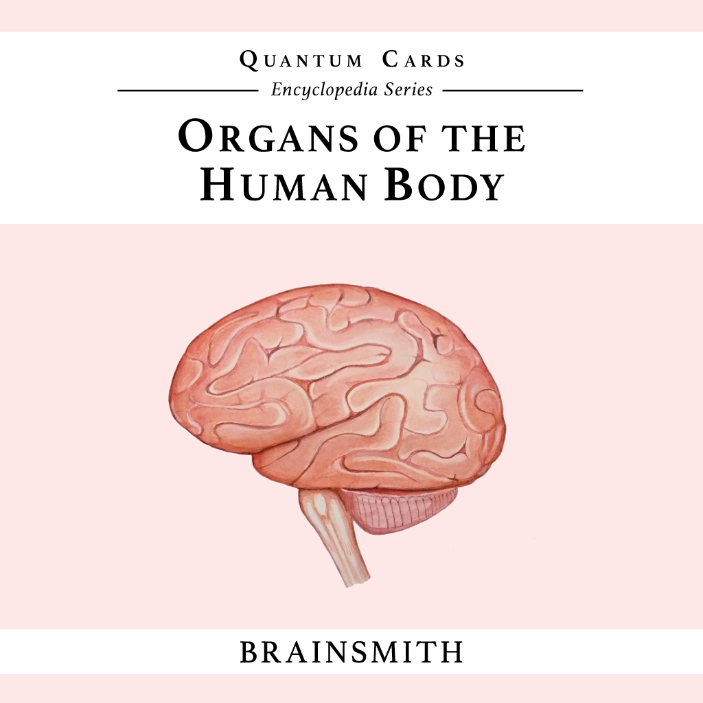 Organs of the Human Body Flashcards | Quantum Cards by Brainsmith