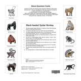 Primates Flashcards for Kids, Animal Flashcards