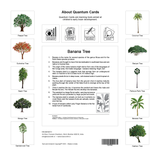 Trees Flashcards for Kids