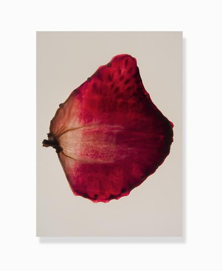 dehydrated strawberry print by Frema
