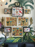 Butterfly Specimen tray wall art by artist Kristjana S Williams