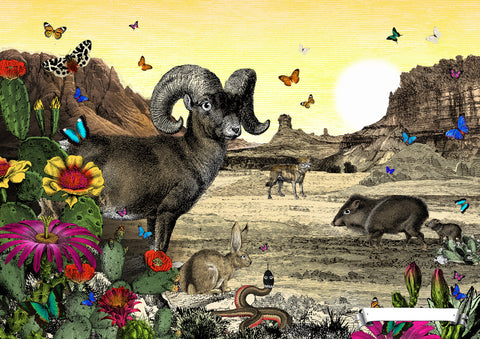 Desert Bighorn Sheep, art print from Wonder Garden children's book by artist Kristjana S Williams