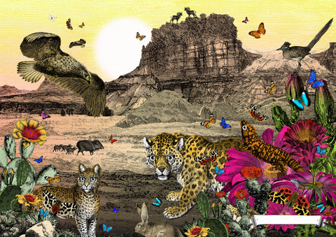 Desert, Jaguar & Golden Eagle art print from Wonder Garden children's book by artist Kristjana S Williams