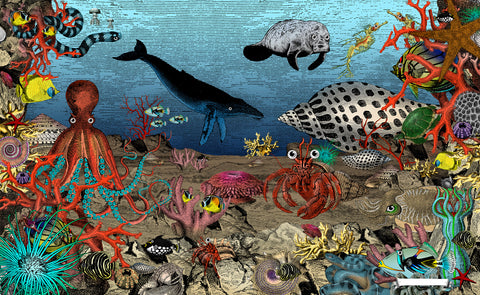 Great Barrier Reef art print from Wonder Garden children's book by artist Kristjana S Williams