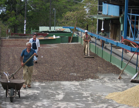 Traditional coffee drying in Boquete, Panamá