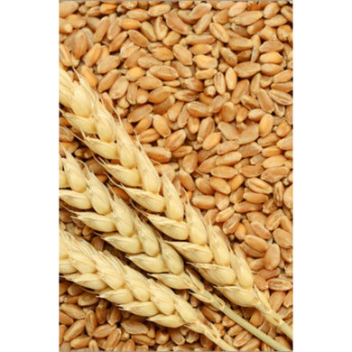 Trigo en Grano | Wheat Whole 500g