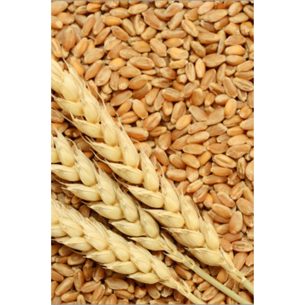 Trigo en Grano | Wheat Whole