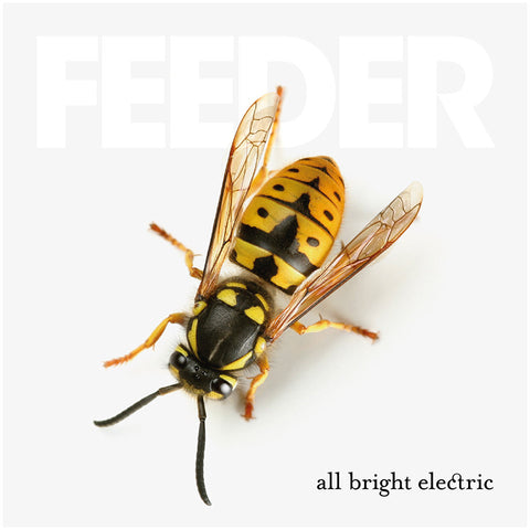 Feeder - All Bright Electric<br>Vinyl LP - Monkey Boy Records