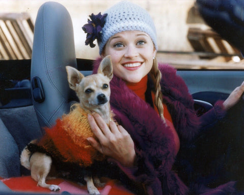 LEGALLY BLONDE REESE WITHERSPOON 8x10 Color Photo Movie Memorabilia Photograph