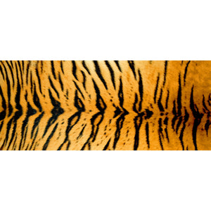Wholesale (2 Units) Tiger Accent Mats