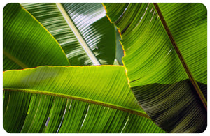 Banana Leaves FoFlor Accent Mat
