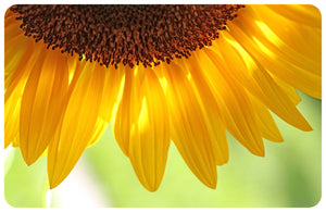 Wholesale- (2 units) Sunflower FoFlor Accent Mat