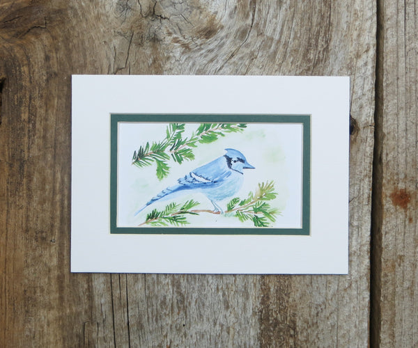 Bluejay Mini Print