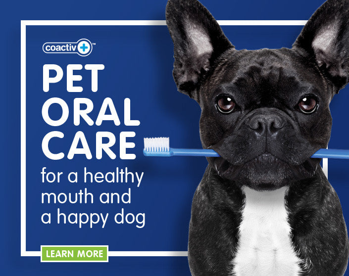 bluestem pet oral care add
