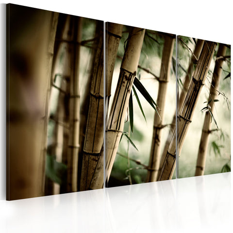 Canvas Print - In a tropical forest