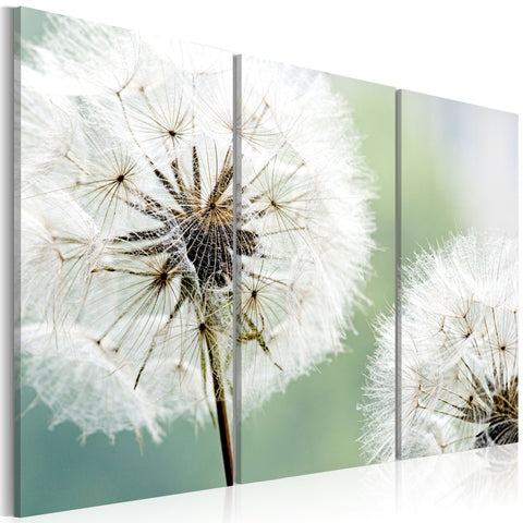 Canvas Print - Fluffy dandelions