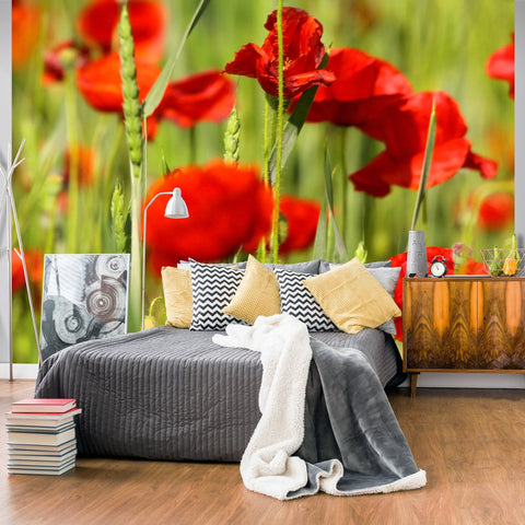 Wallpaper - Cereal field with poppies