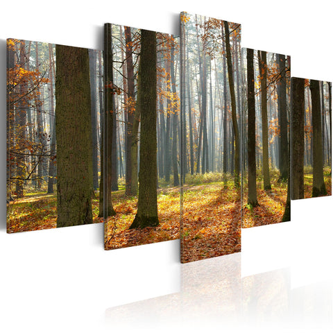 Canvas Print - A nice forest landscape
