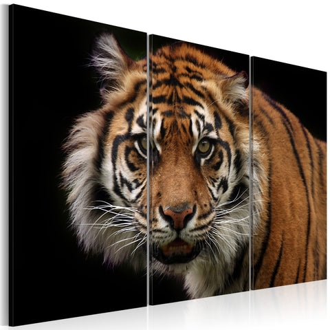 Canvas Print - A wild tiger