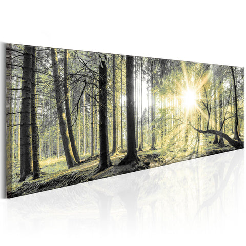 Canvas Print - Morning Forest