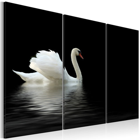 Canvas Print - A lonely white swan