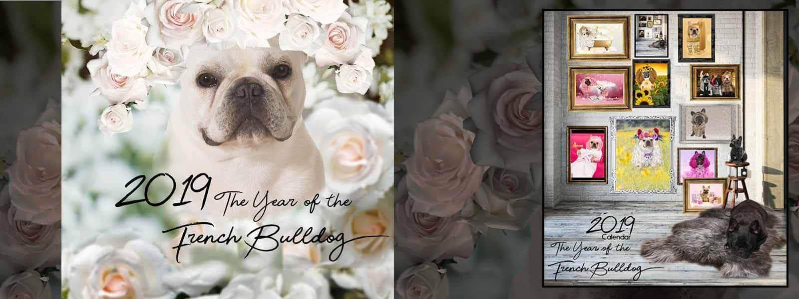 Year of the French Bulldog Calendar for 2019 Now Available