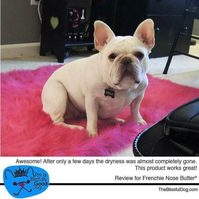 french bulldog nose butter review