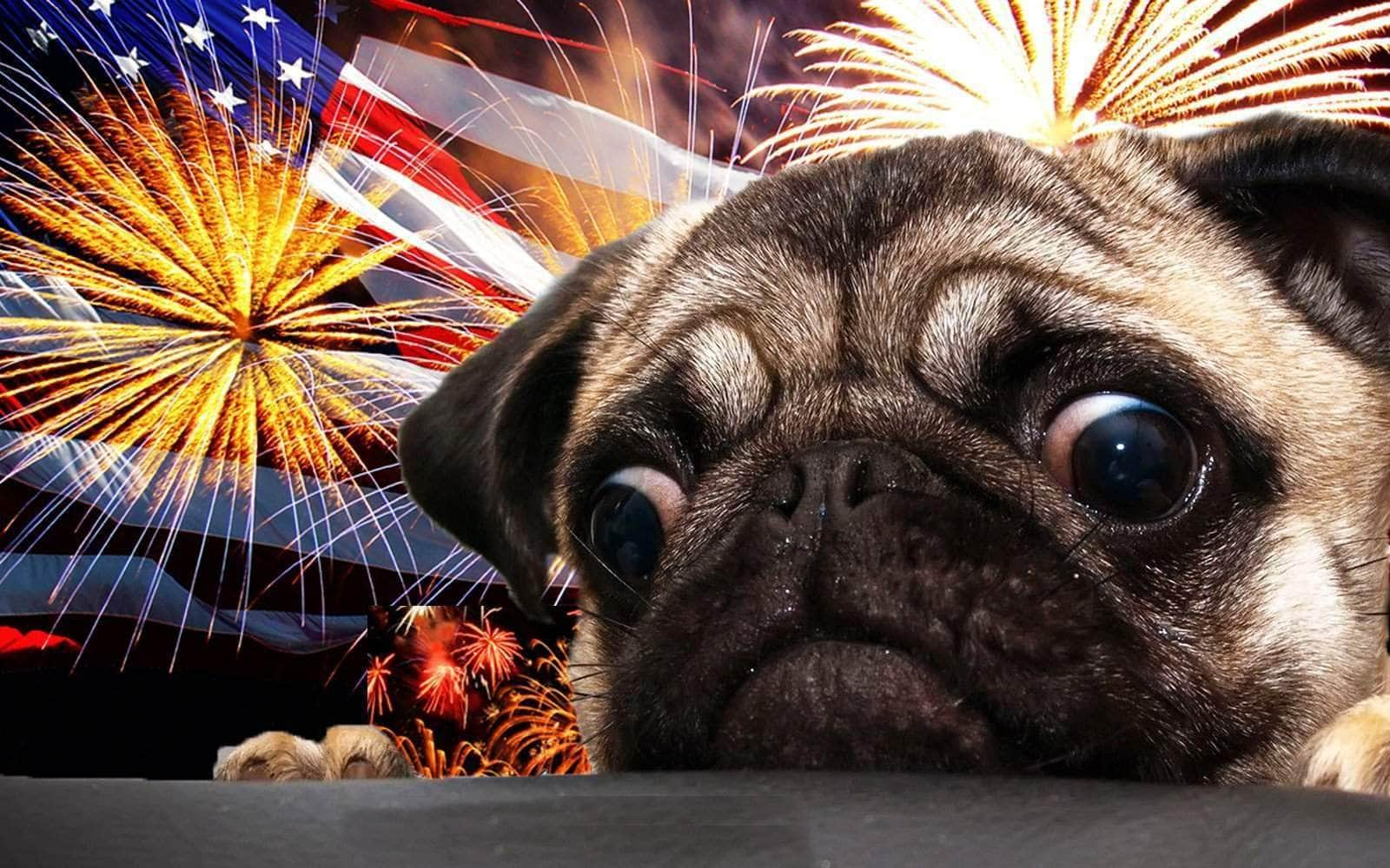4th of July dog scared