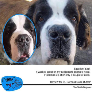 Review of Saint Bernard Nose Butter