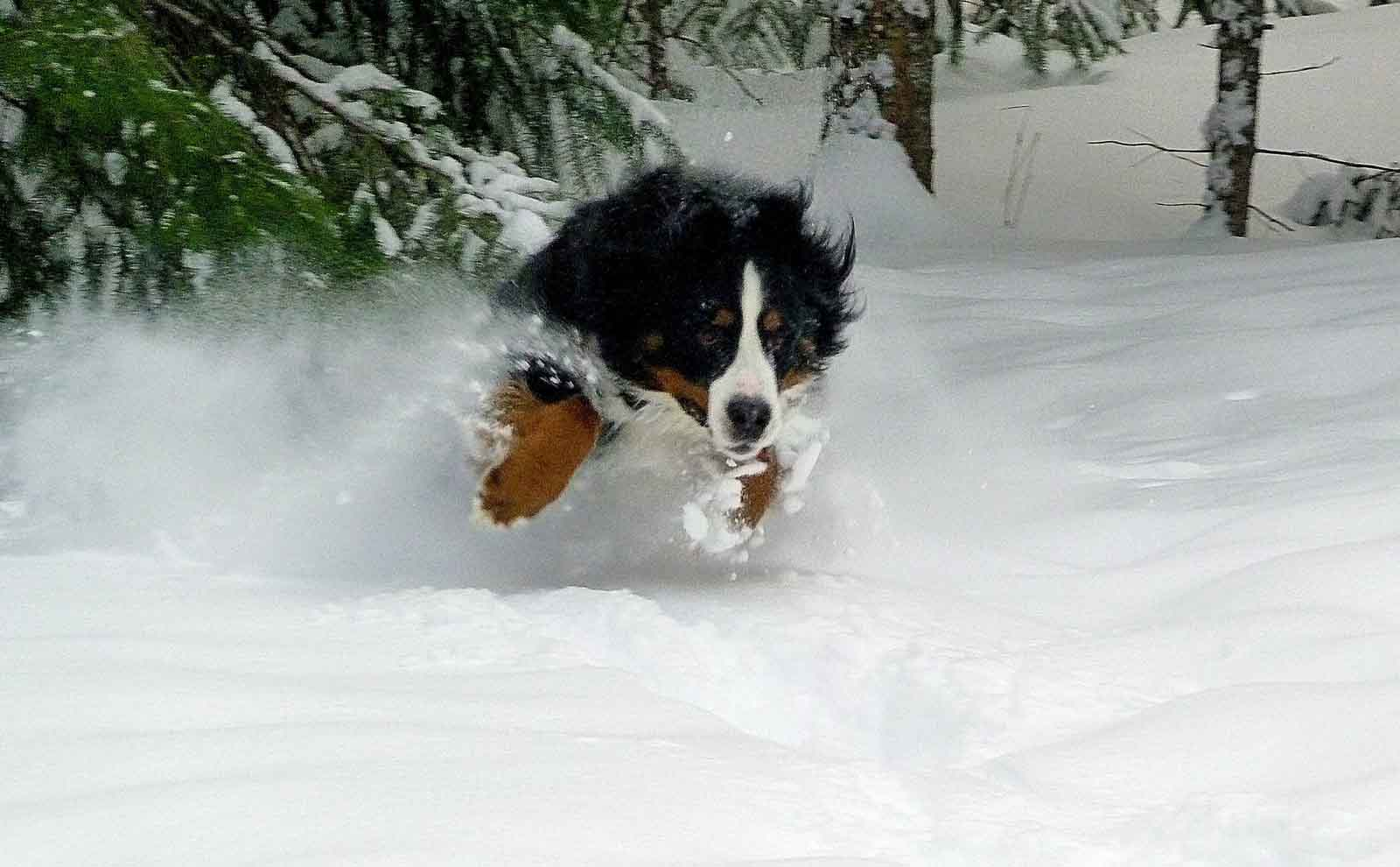 BRRRR…Cold Weather Tips for You and Your Blissful Dog