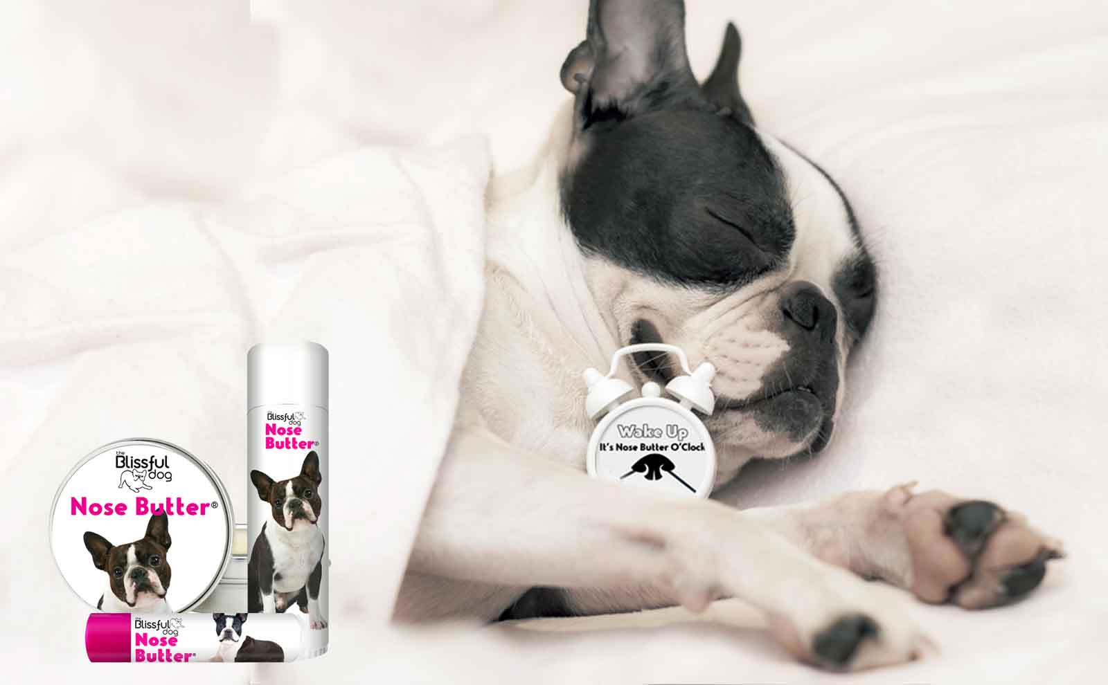 Boston Terrier Nose Butter Review
