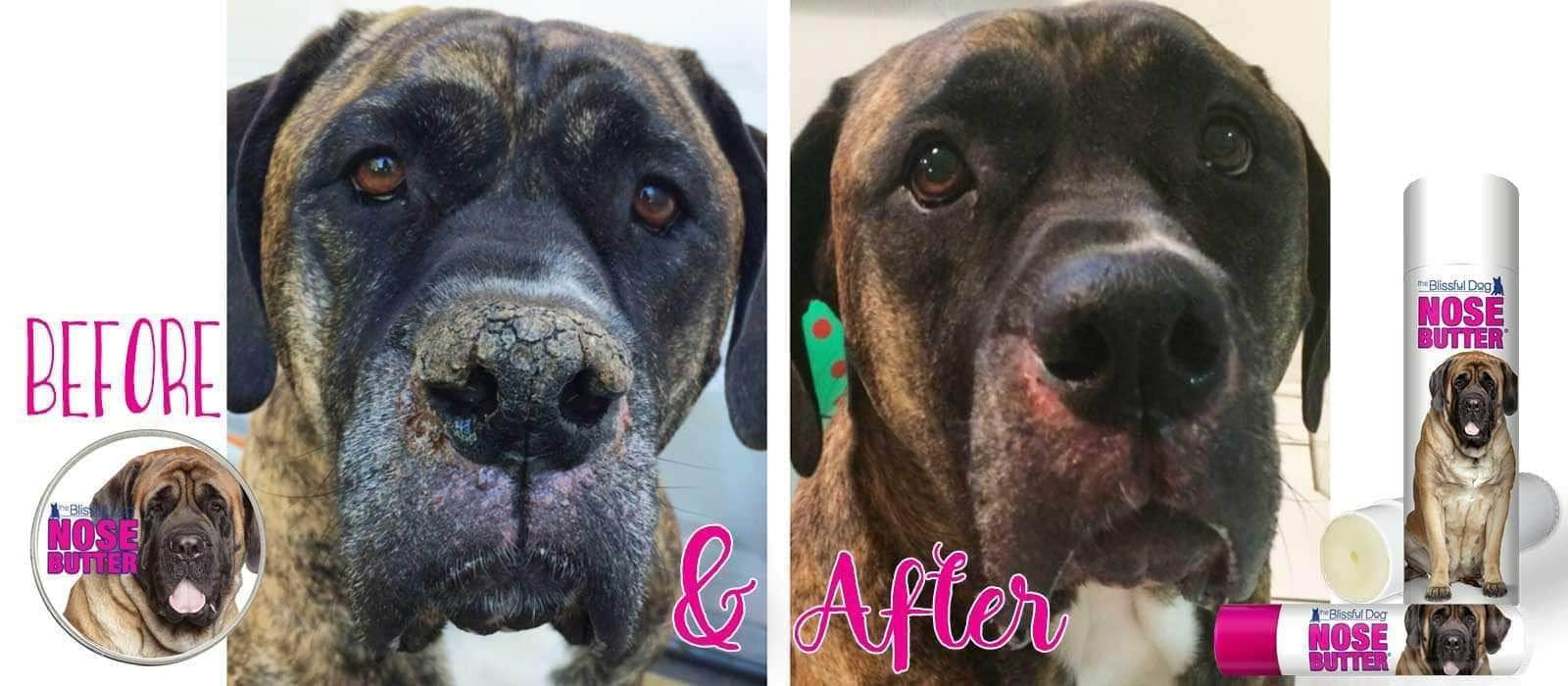 Before & After Mastiff Nose Butter
