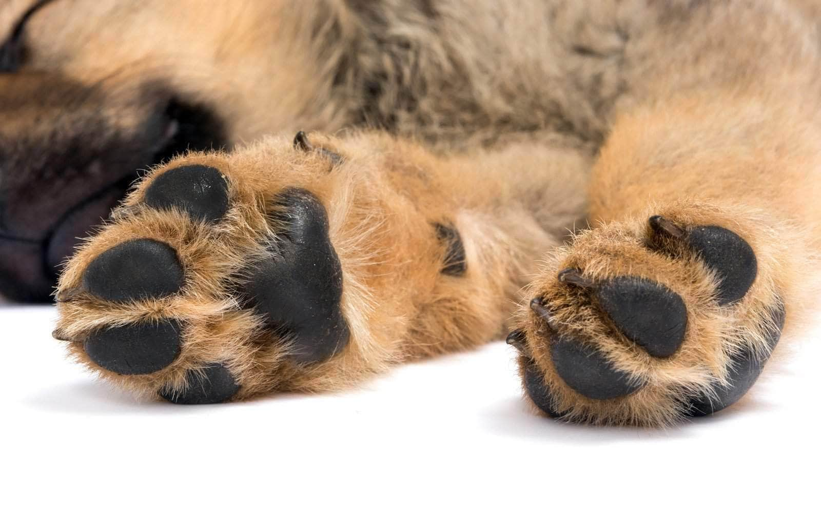 perfect puppy paws