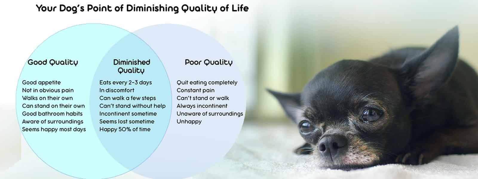 Quality of Life Chart To Evaluate Your Dog's Quality of Life