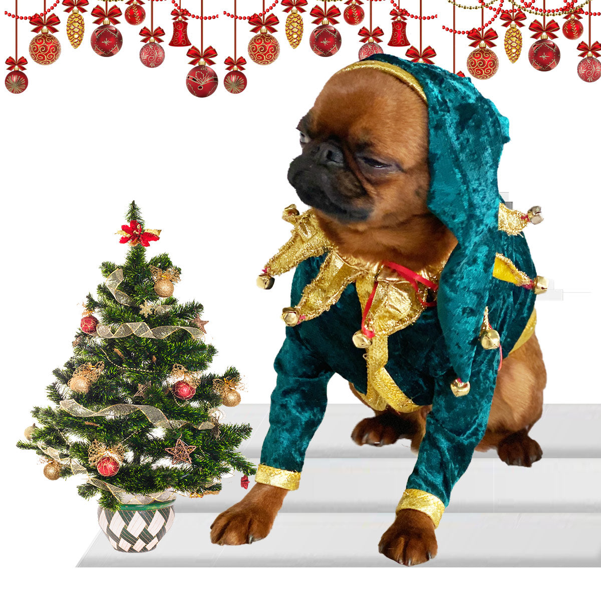 Larccan the Brussels Griffon Elf