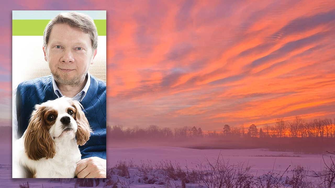 Eckhart Tolle and Dogs by Connie Wilson