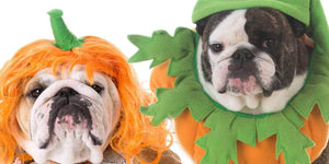 Tips for a Safe Halloween for Your Dog