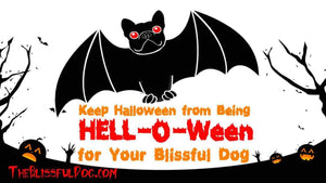 Costume Tips for a Fun Halloween for You and Your Dog
