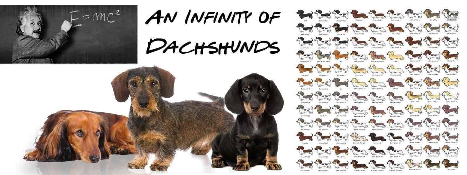 Dachshund Are Not One Size Fits All