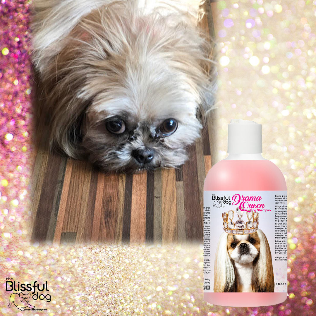 The Blissful Dog Drama Queen Shampoo | I Love This Shampoo!