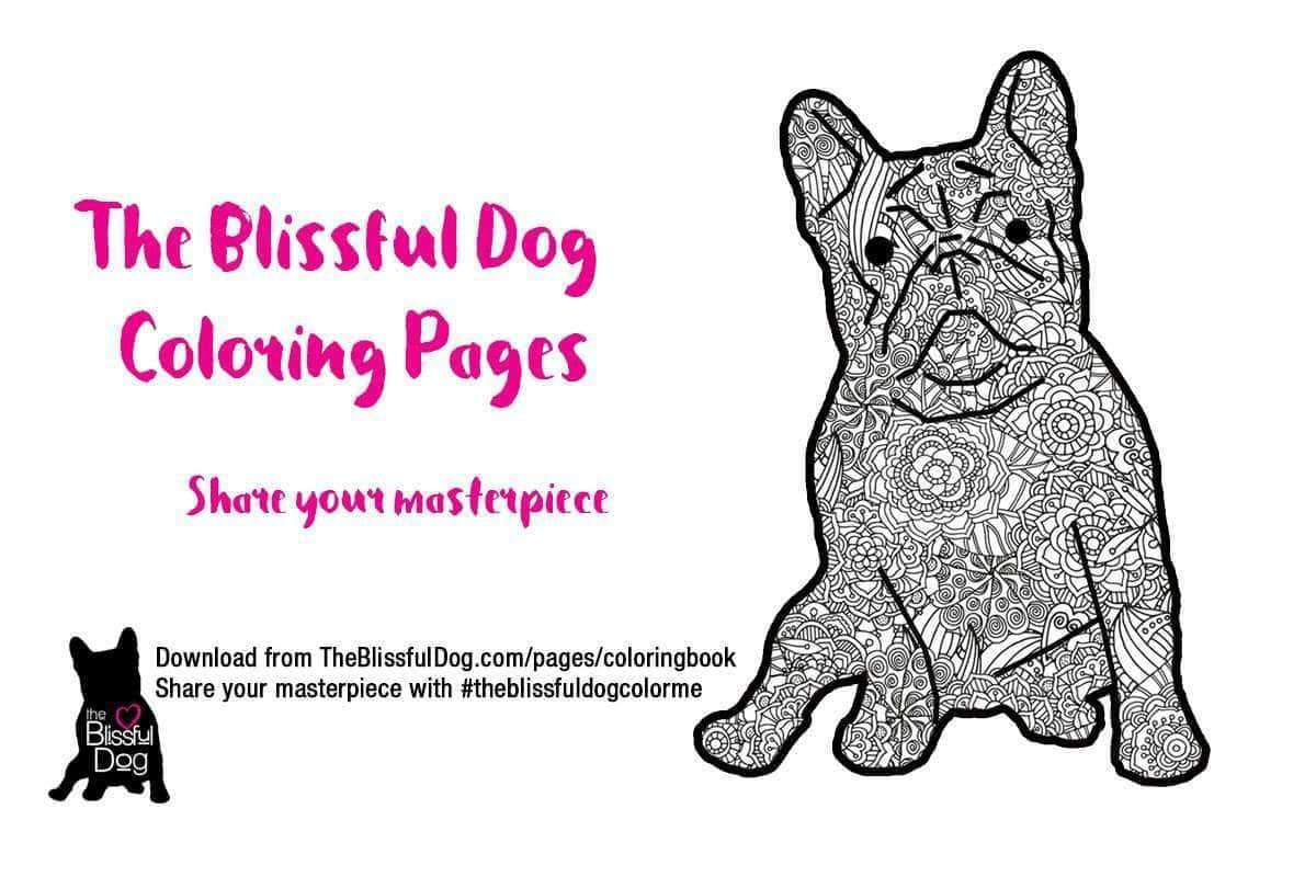 The Blissful Dog   DOG COLORING BOOK