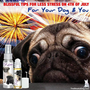 TIPS FOR SURVIVING THE 4TH WITH AN ANXIOUS DOG