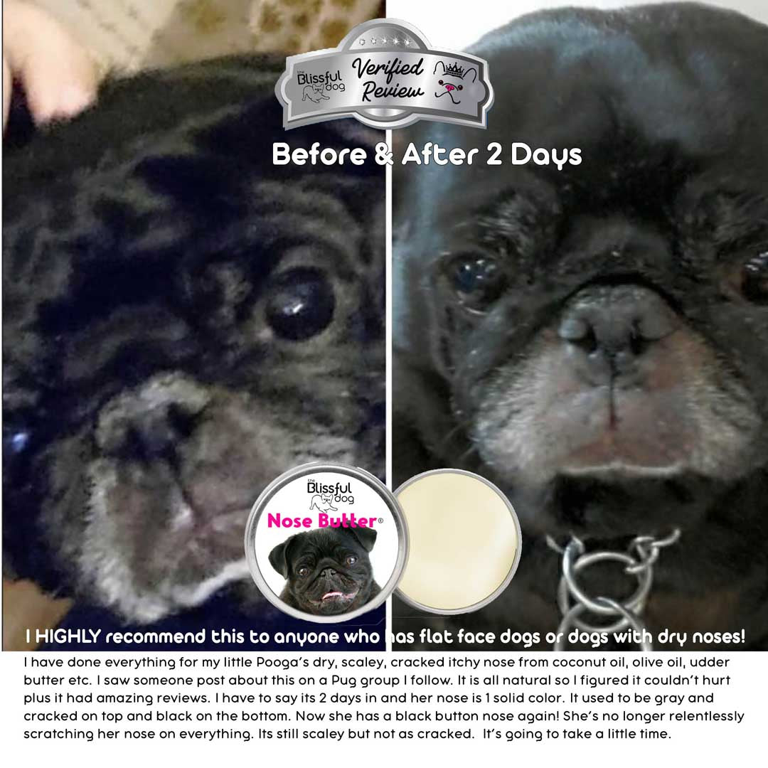 pogo pug dry nose before and after nose butter