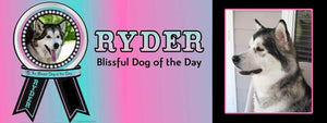 the blissful dog of the day ryder
