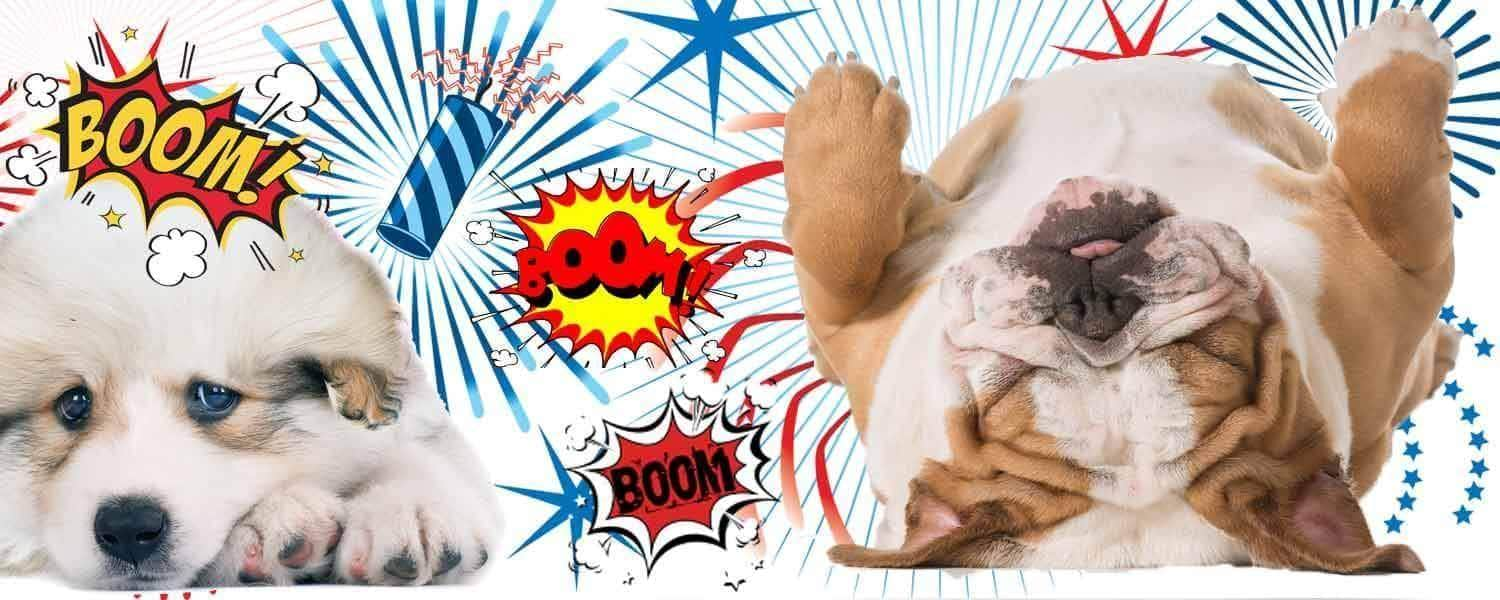 dogs afraid fireworks