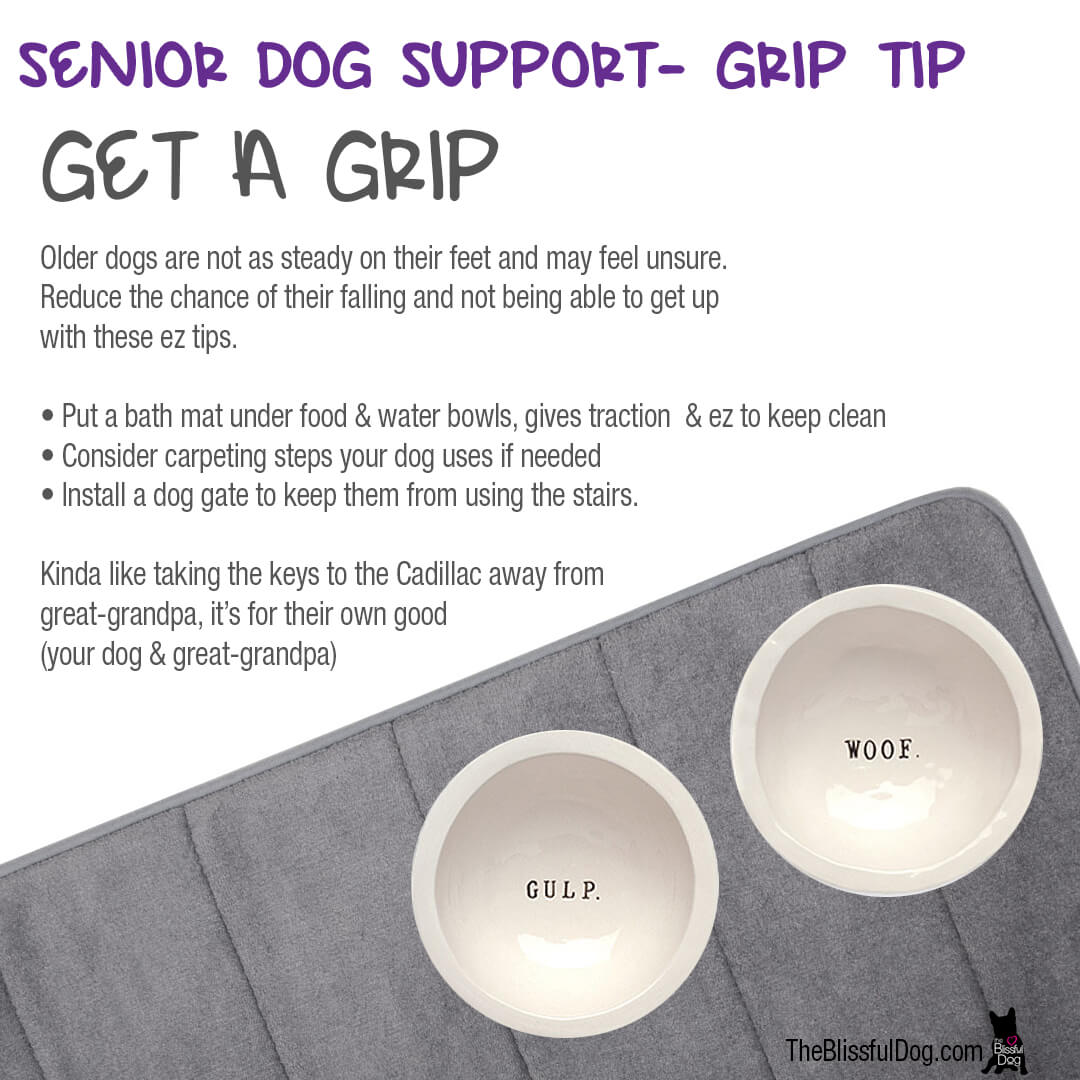 senior dog grip