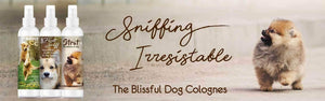 Sniffing Irresistible New Dog Colognes
