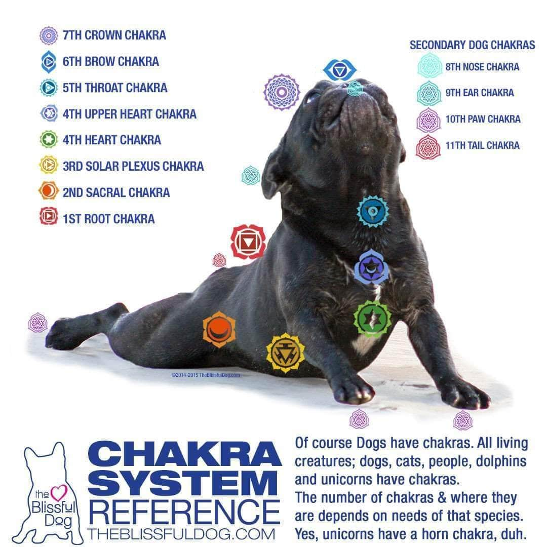 JOURNEY THROUGH YOUR DOG'S CHAKRA SYSTEM