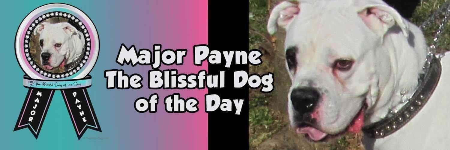 major Payne the blissful dog of the day